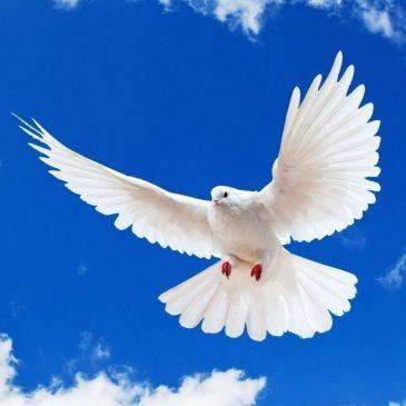 Dios bendijo una paloma