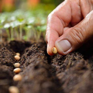 ¿Qué estás sembrando?