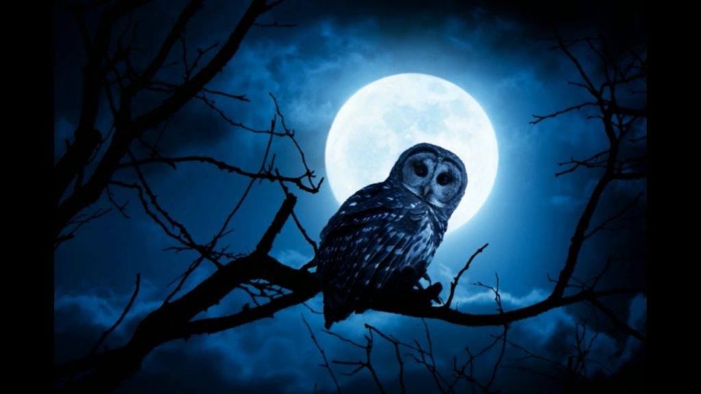 Neutralizing owl curses.