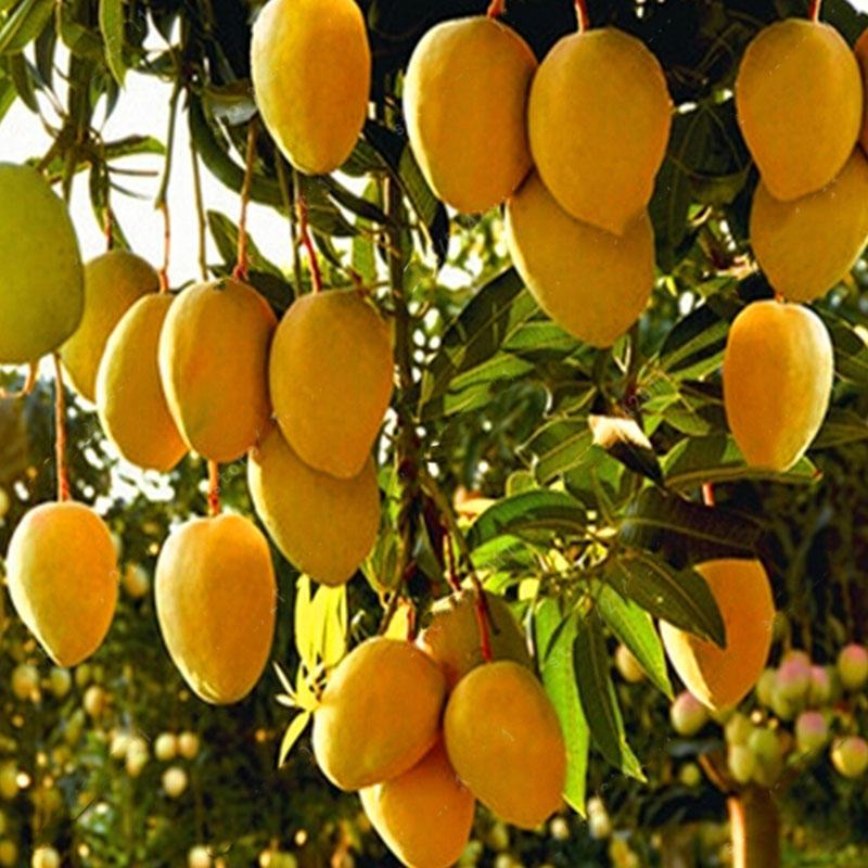 7 formas de dar fruto en el Reino de Dios